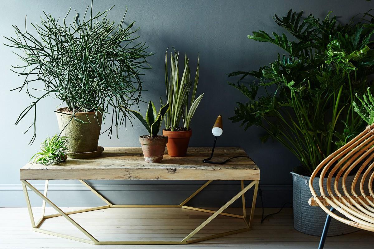 полноценный уход и выращивание комнатных растений и цветов в феврале фото