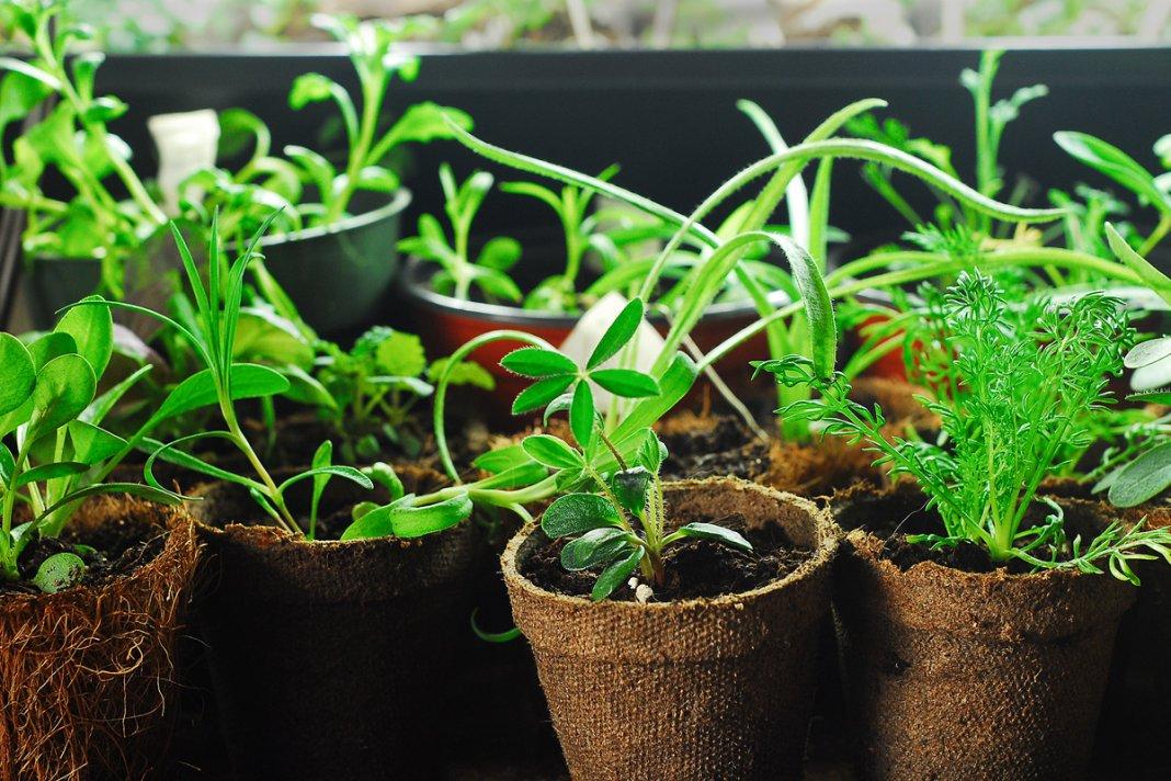 выращивание рассады цветов и декоративных растений фото