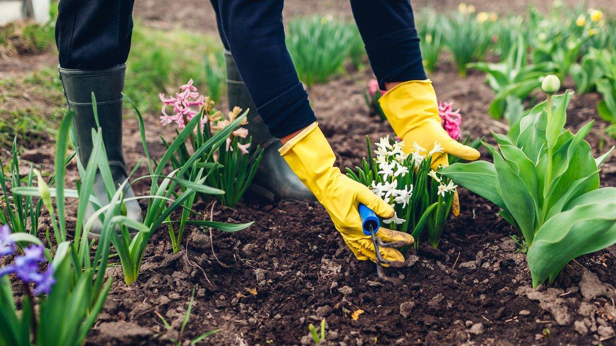 высадка растений в открытый грунт и посев по неделям фото