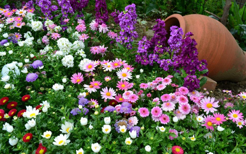 благоприятные дни для посева и посадки цветов в феврале 2021 года фото