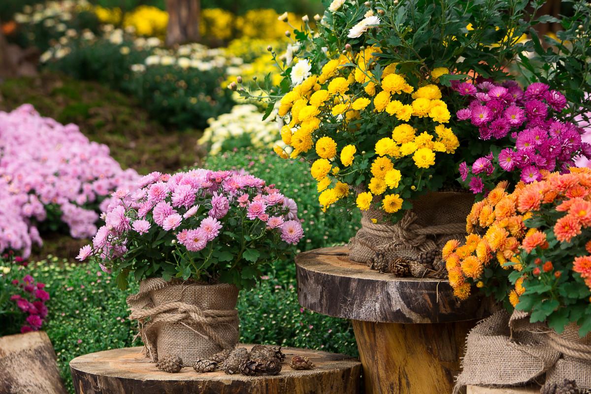 какие цветы сеять на рассаду в феврале в 2021 году фото