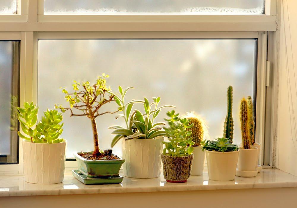 пересадка комнатных растений в марте по Лунному календарю 2021 года: благоприятные, нейтральные и запрещенные дни фото 2