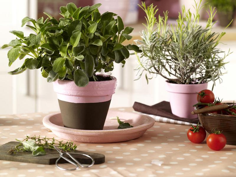 полноценный уход за комнатными растениями в марте 2021 года фото