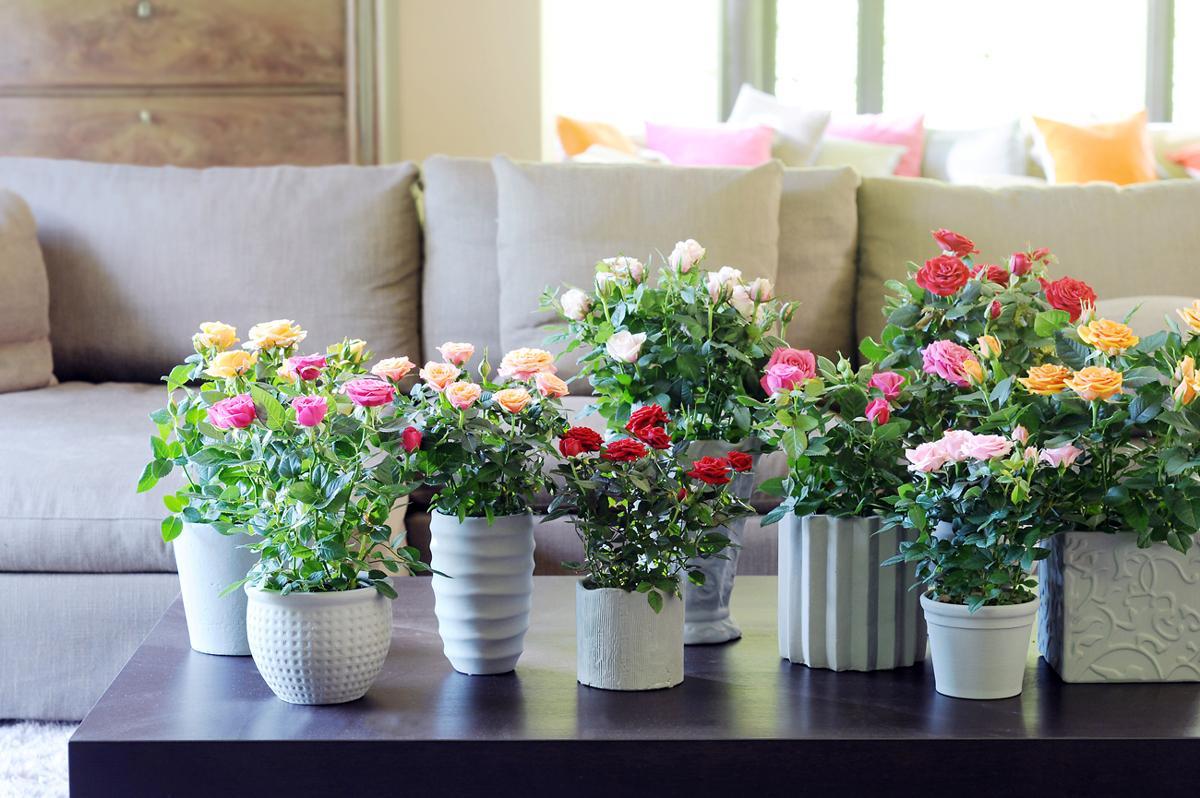 советы и рекомендации по уходу и выращиванию за комнатными растениями в феврале 2021 года фото
