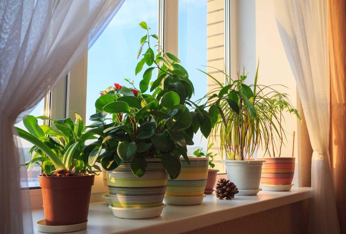 Луна - влияние фаз на комнатные растения фото