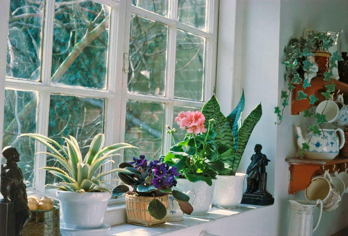 Лунный календарь для комнатных растений и цветов на январь 2021 года фото