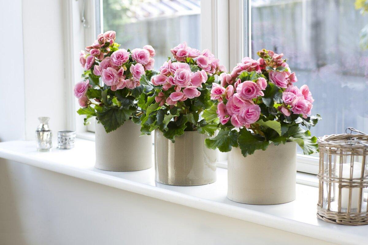 Лунный календарь на январь 2021 года для комнатных растений и цветов по дням фото