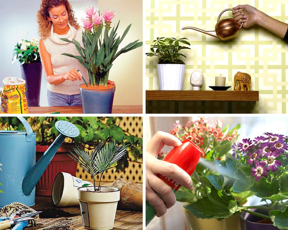 полноценный уход за комнатными растениями в январе 2021 фото