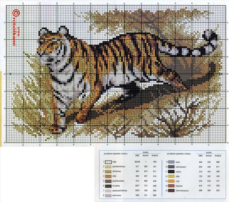 tigr-simvol-goda-2022-foto-14