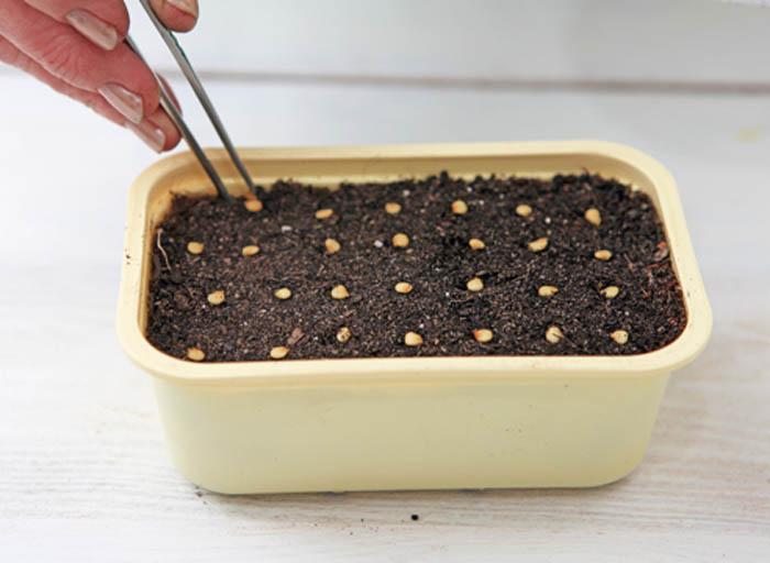 правильная подготовка семян к посеву фото 1