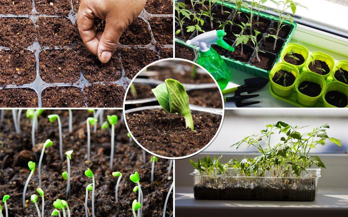 как сажать помидоры на рассаду фото