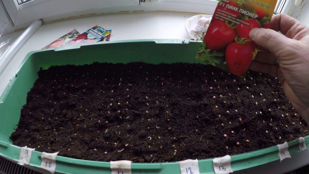 посев помидоров на рассаду в 2021 году, фото и видео 1