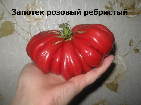 экзотические и редкие сорта томатов от Попенко Валерия Дмитриевича фото 6