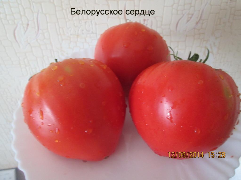 томаты от Ильи Королева фото 5