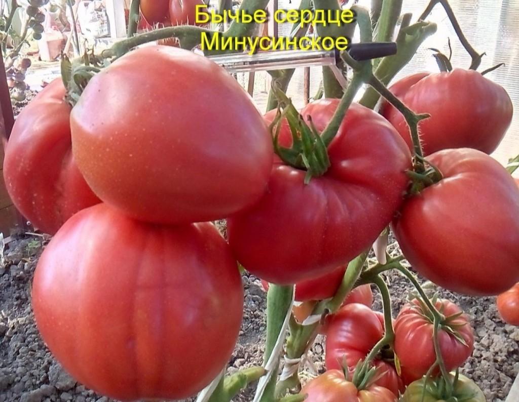 помидоры от Аллы Кондратьевой фото 3