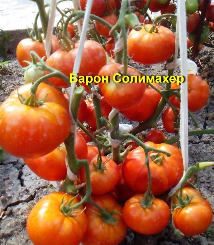 помидоры от Аллы Кондратьевой фото 4