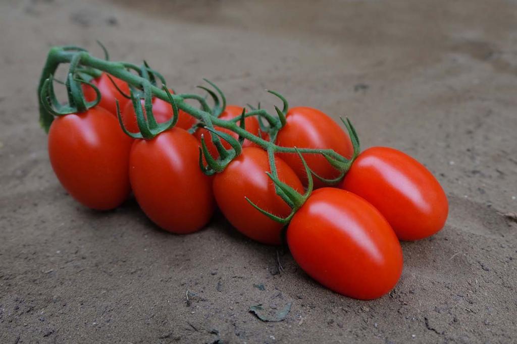 лучшие урожайные сорта для открытого грунта фото 1