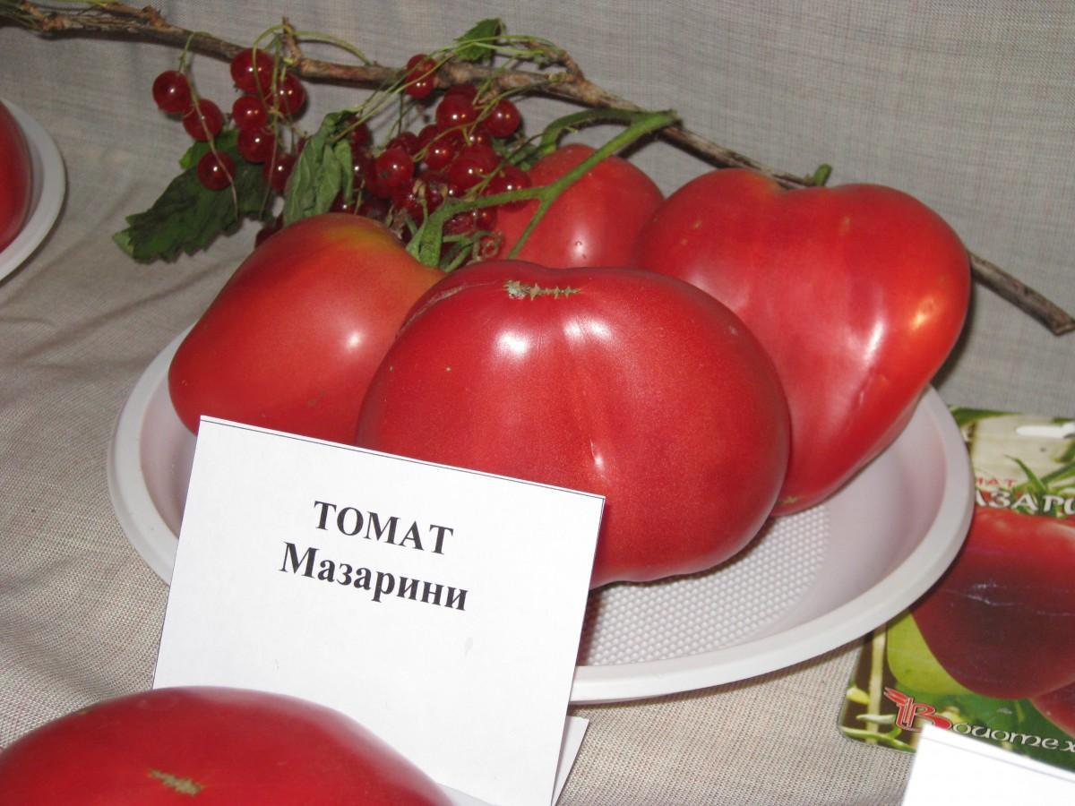 лучшие урожайные сорта для открытого грунта фото 4