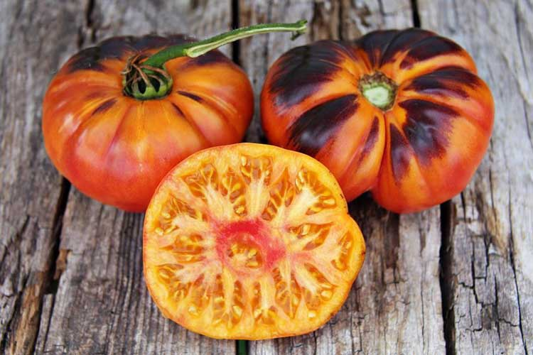 томаты от Лидии Ганзен фото 2