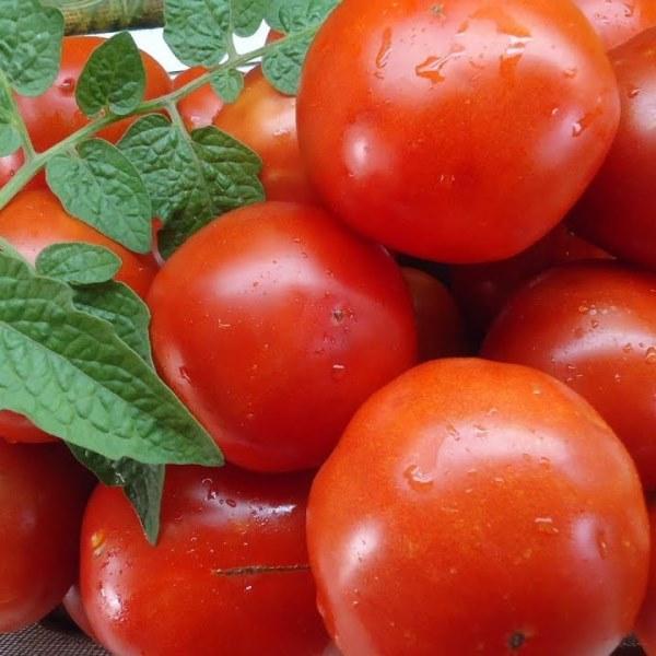лучшие урожайные сорта для открытого грунта фото 9