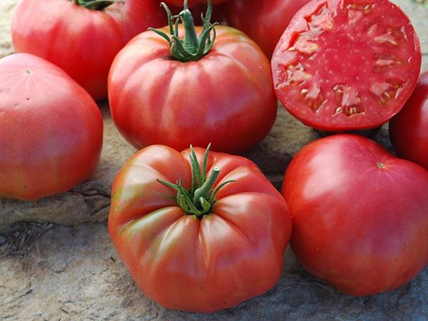 высокорослые помидоры, описание и фото 3