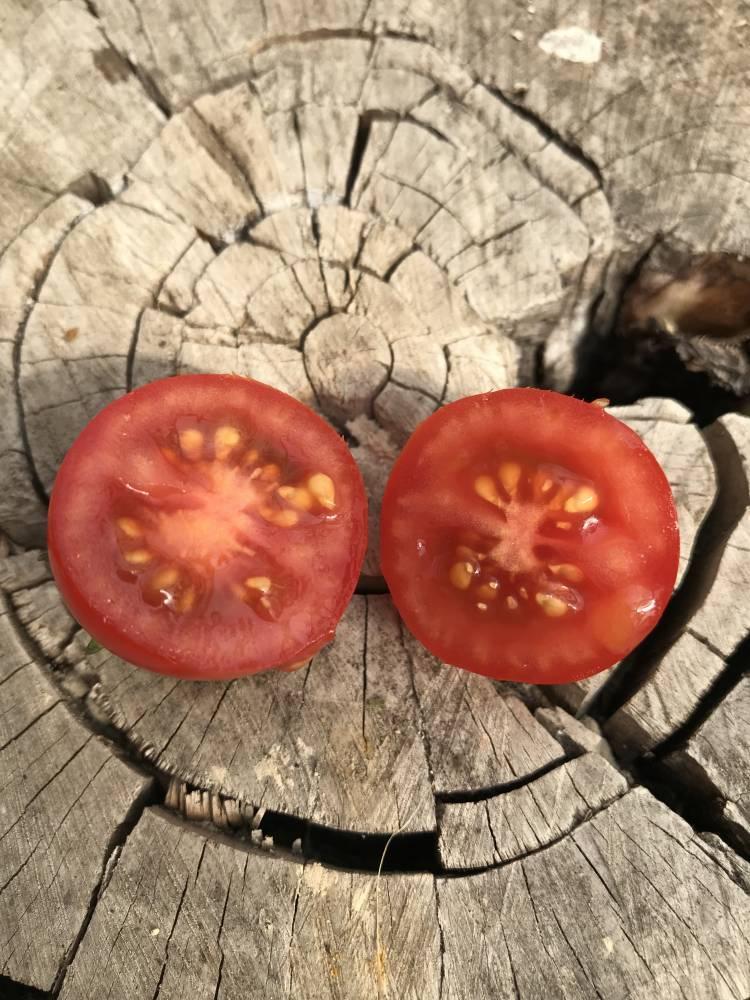 карликовые (низкорослые) сорта фото 1
