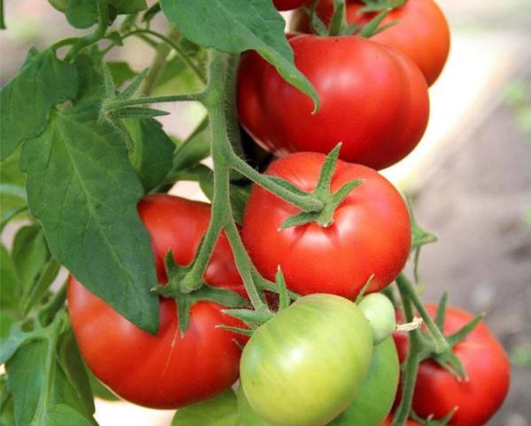 лучшие гибриды томатов F1 2021 года фото 1