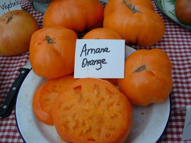 томаты от Лидии Ганзен фото 4