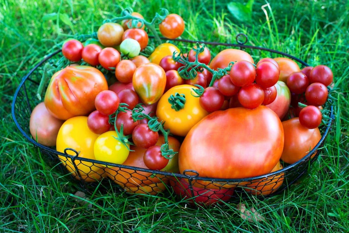 фото урожая 1
