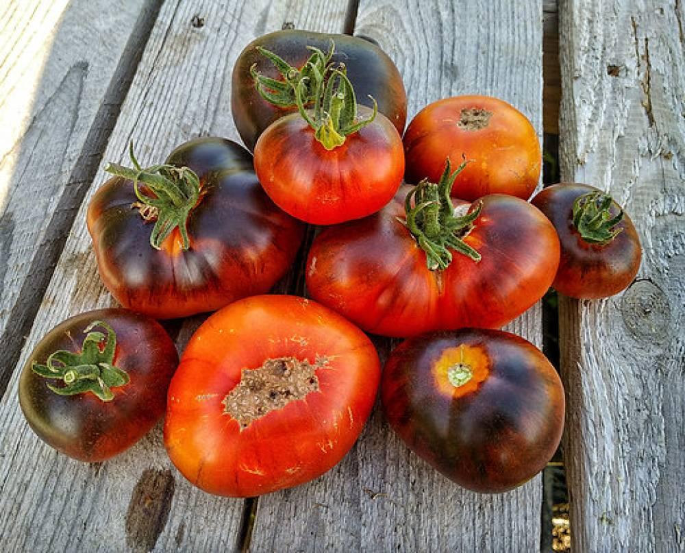 томаты от Лидии Ганзен фото 7