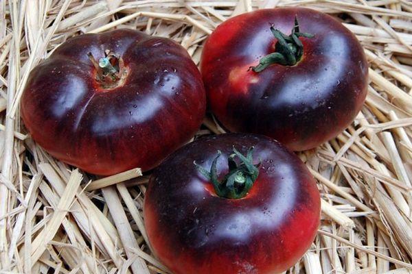 экзотические и редкие сорта томатов от Попенко Валерия Дмитриевича фото 2