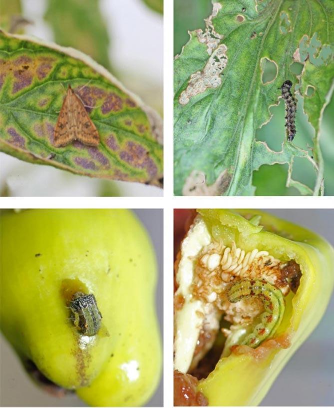 борьба с насекомыми-вредителями и болезнями фото 2