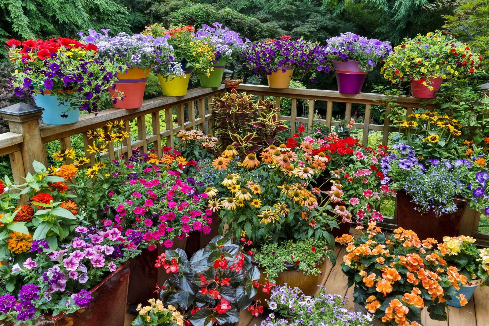 благоприятные дни для посадки цветов в 2021 году фото
