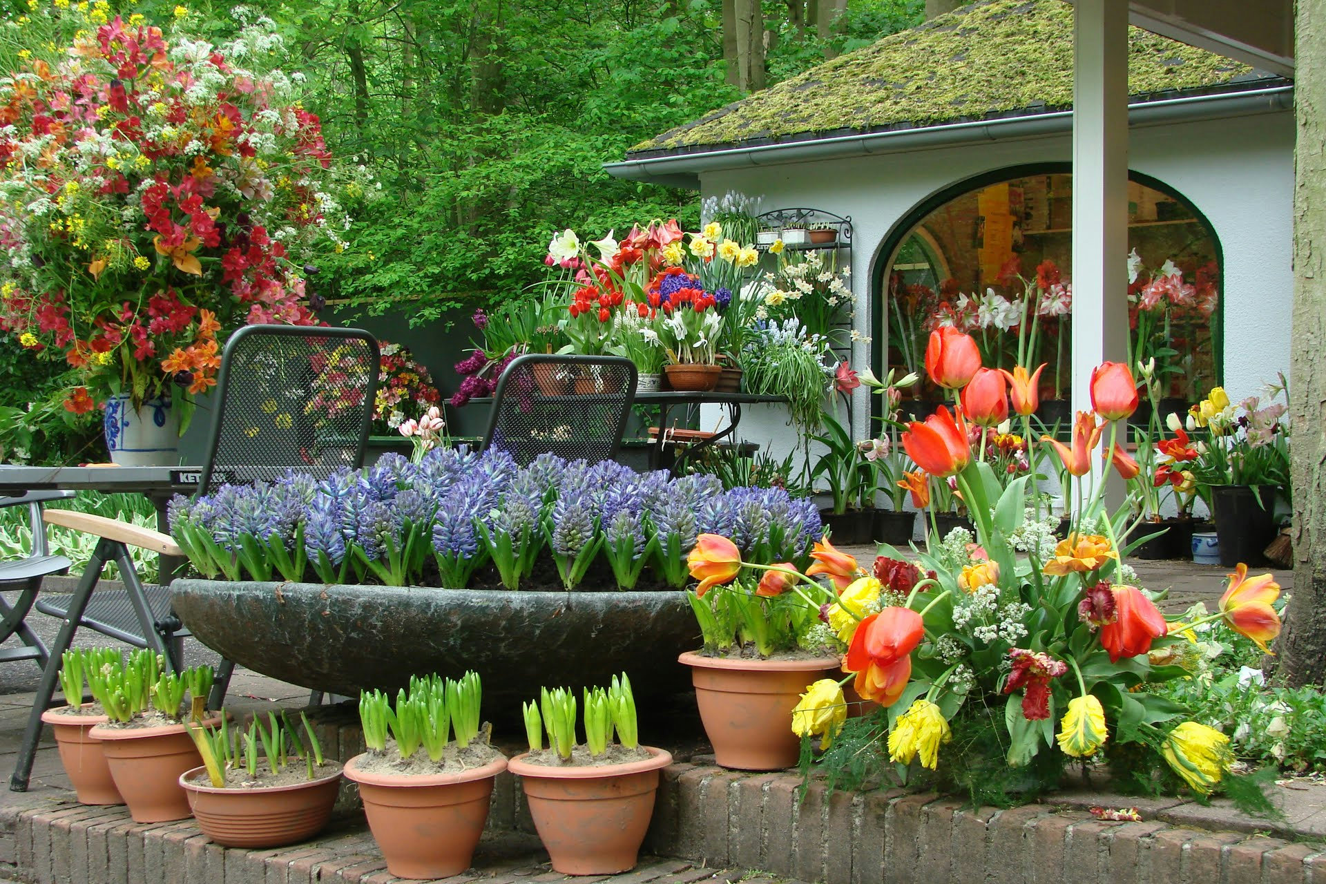 регулярный уход за однолетними и многолетними цветами фото
