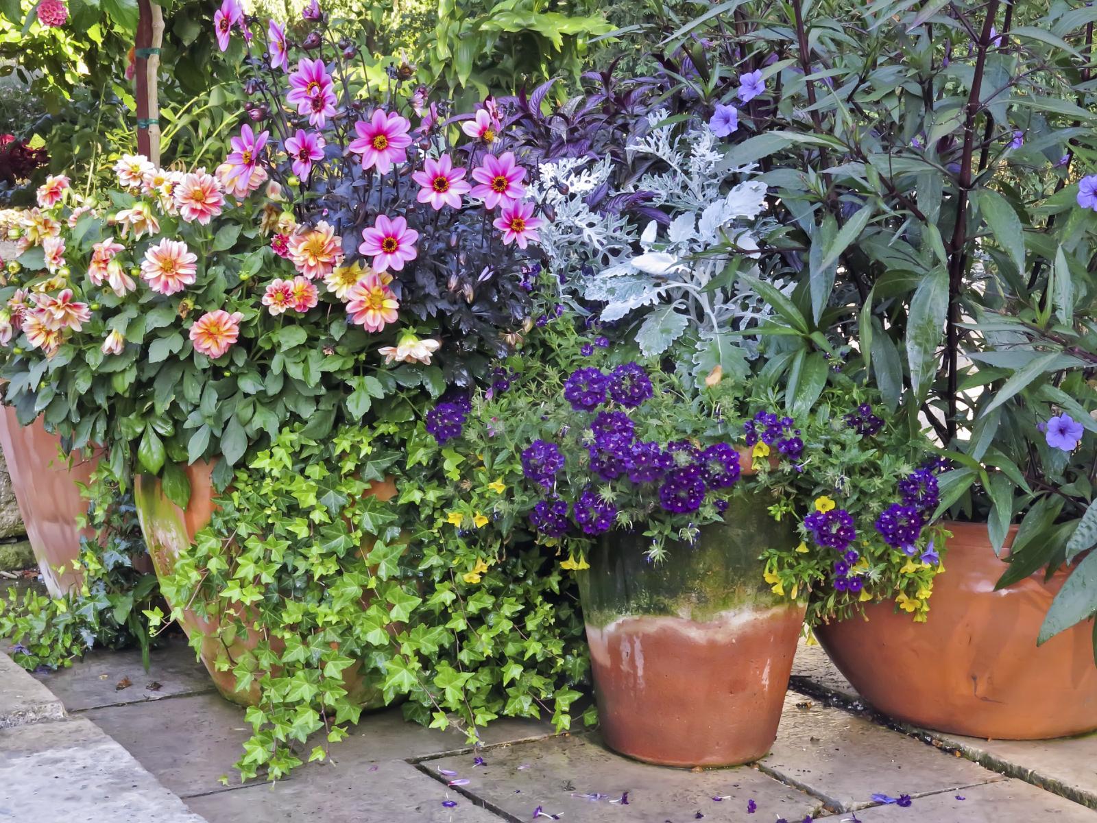 рекомендации для получения обильного цветения фото