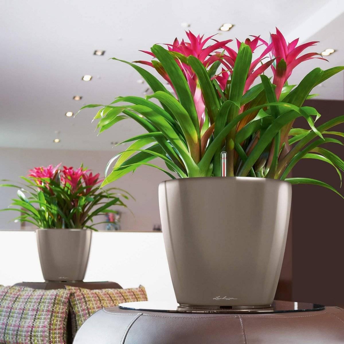 как ухаживать за комнатными растениями и ухаживать в феврале фото 1