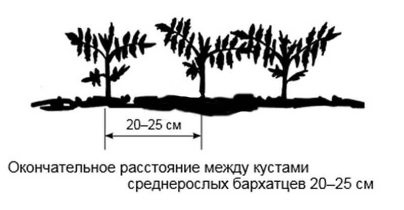 рекомендованная схема посадки фото
