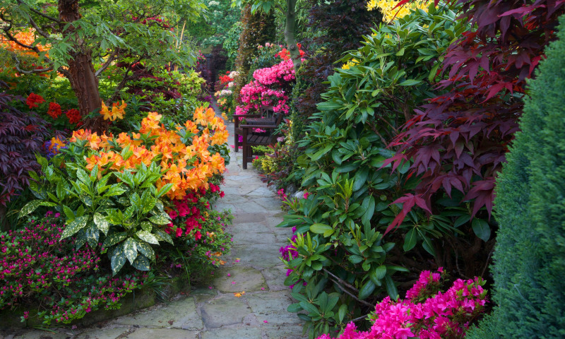 посадка цветов в феврале и уход за комнатными растениями фото