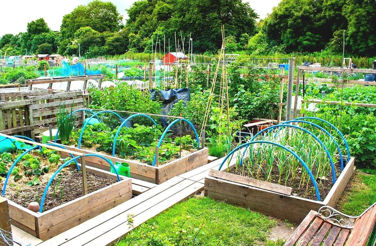 таблица, составленная по Лунному календарю для огородника и садовода Краснодарского края на 2021 год фото