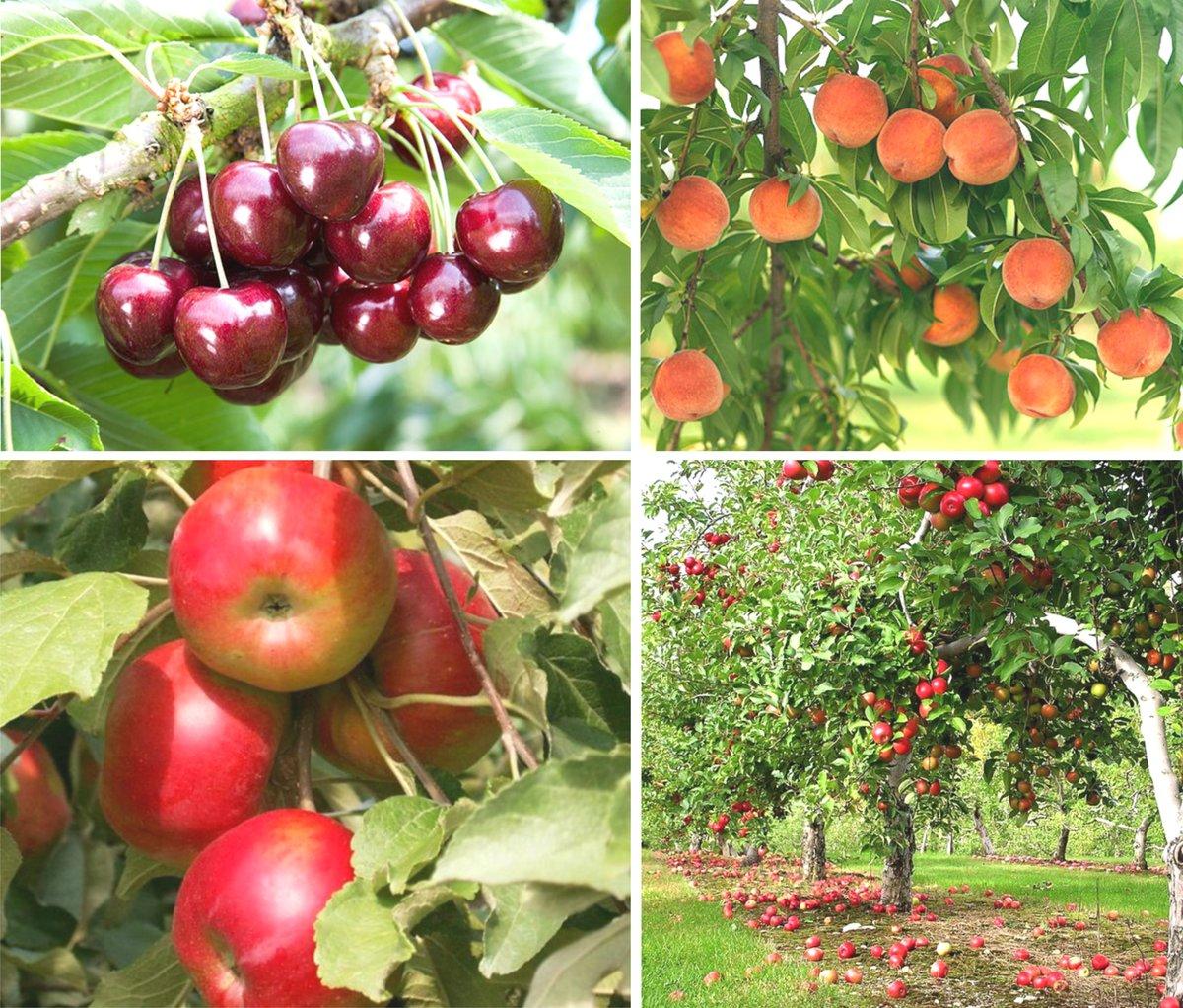 таблица, составленная по Лунному календарю для огородника и садовода Краснодарского края на 2021 год фото 3