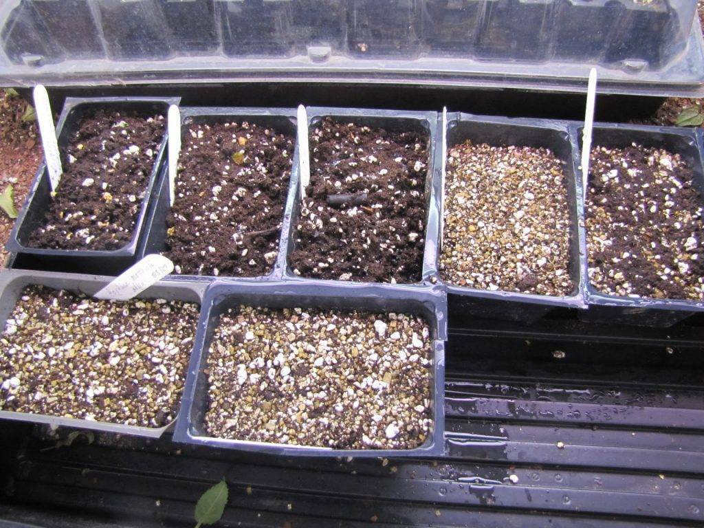 подготовка к посеву семян фото