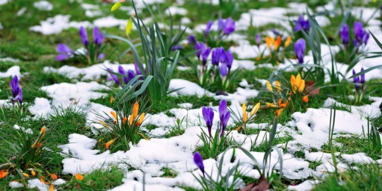 лунный посадочный календарь садовода и огородника на март 2021 года: самые благоприятные дни фото