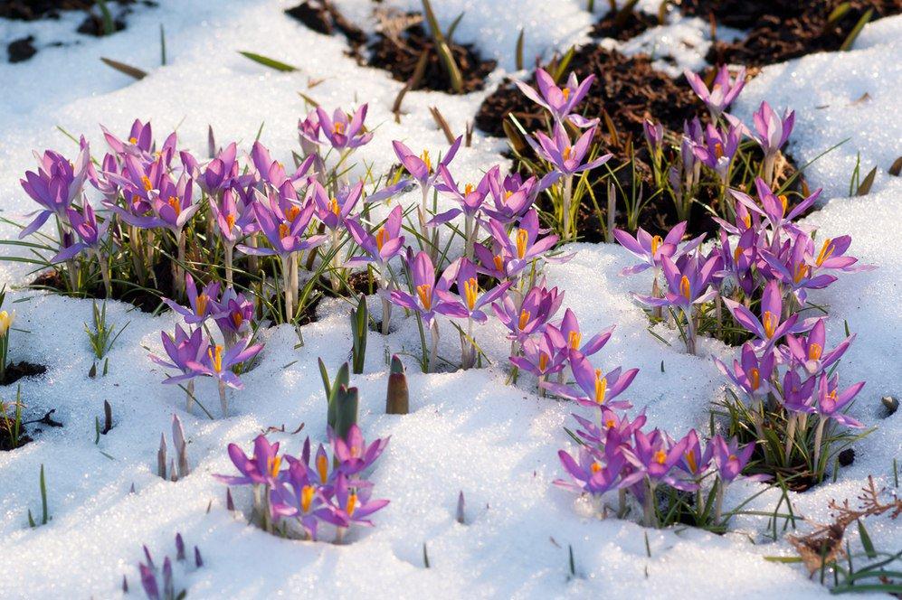 благоприятные дни для садовода и огородника в марте 2021 года по Лунному календарю посадок фото
