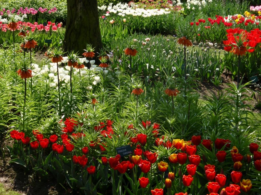 лунный календарь цветовода на 2021 год: благоприятные дни для садовых цветов и комнатных растений, посев, посадка и пересадка фото