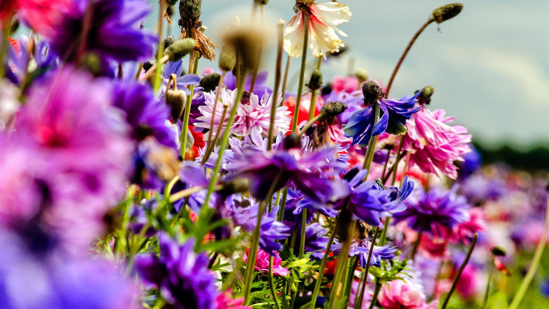летние работы с комнатными растениями и садовыми цветами фото