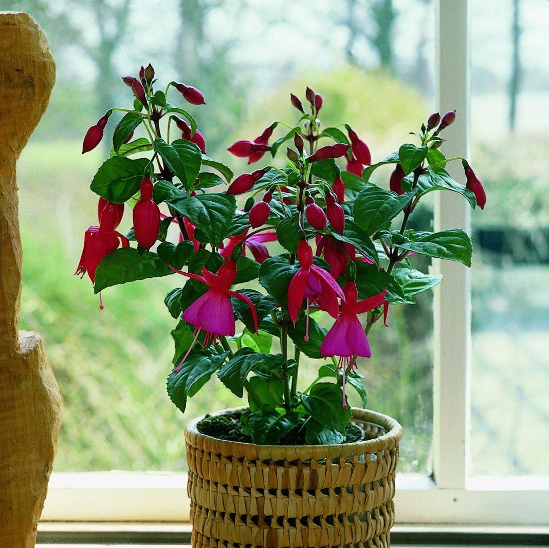 знаки зодиака, как покровители - прямое воздействие на растения фото