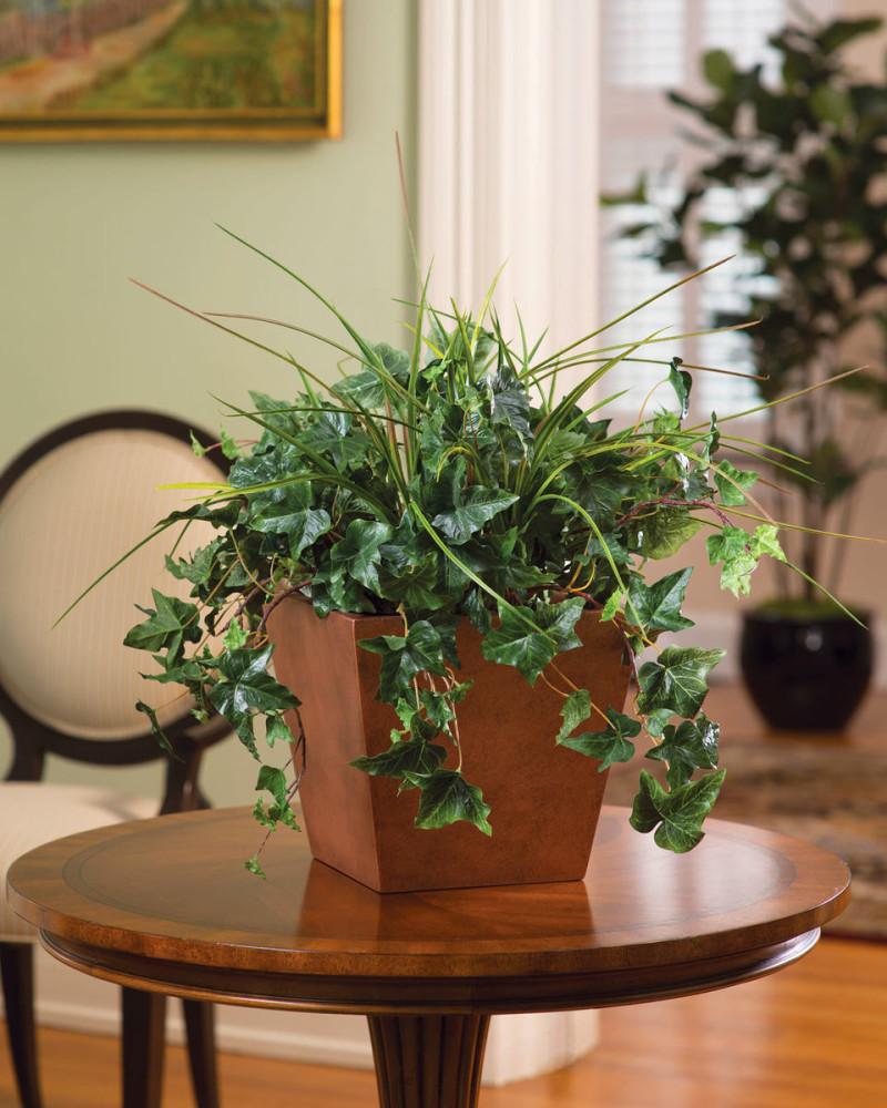 Посадка, уход и перевалка вьющихся комнатных растений фото