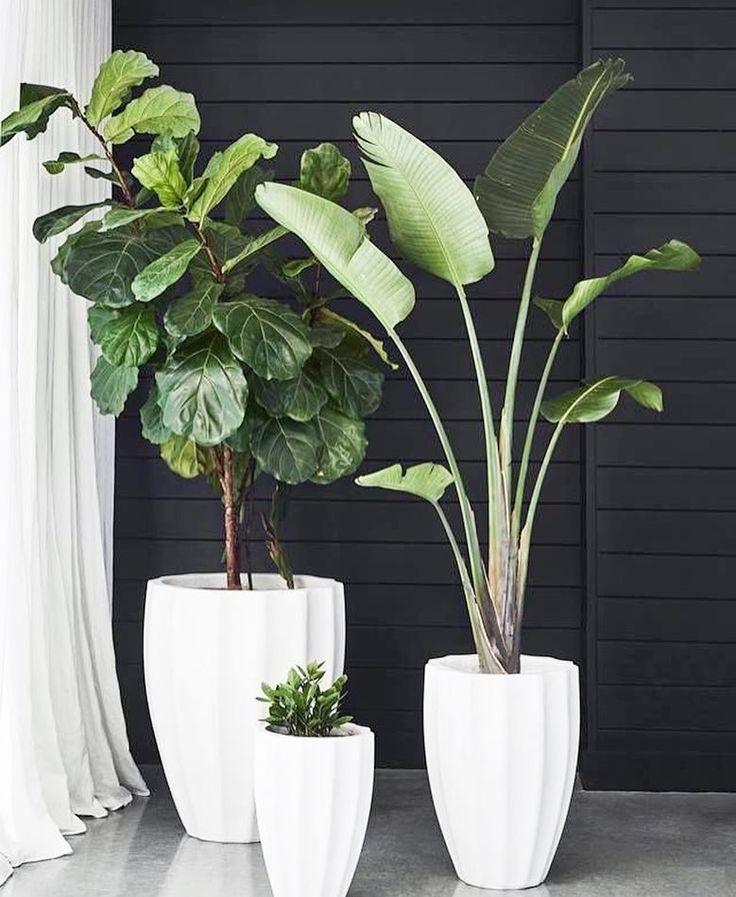 Посадка и пересадка комнатных растений по месяцам фото