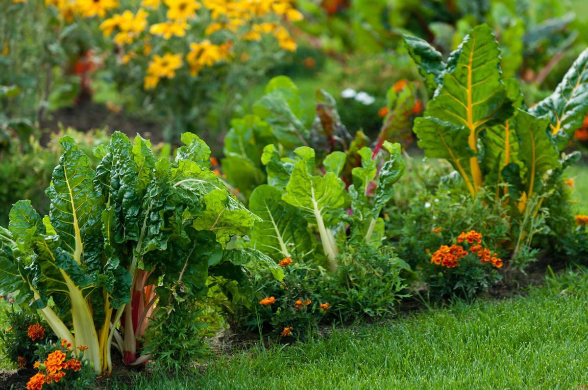 Лунный посевной календарь для садоводов и огородников Украины на 2021 год: благоприятные дни по месяцам