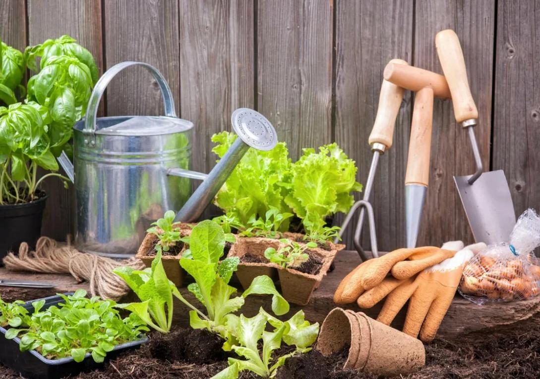 благоприятные дни по Лунному посевному календарю для посевов и посадки для садовода и огородника на 2021 год фото